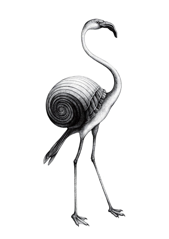 fenicottero nero - Eleonora Casetta